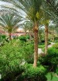 trädgården gömma i handflatan Arkivfoto