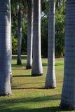 trädgården gömma i handflatan Arkivbilder