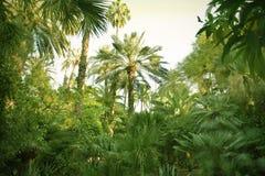 trädgården gömma i handflatan Royaltyfri Fotografi