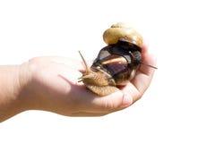 trädgården gömma i handflatan snailen Fotografering för Bildbyråer