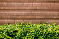 Trädgården i hem fotografering för bildbyråer