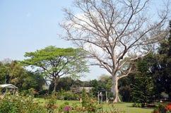 Trädgården i numeriska Tok Chet Sao Noi Waterfall National parkerar Arkivfoto