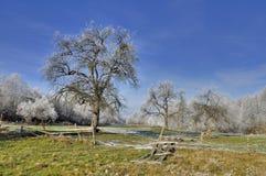 Trädgården i vintertid Arkivbilder