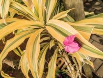 Trädgården lämnar med rosa blommakronblad royaltyfri bild