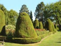 trädgården steg Vektor Illustrationer