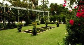 trädgården steg Arkivfoto