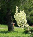 Trädgården trädet, blomman, gräs, parkerar arkivfoto