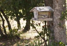 trädgårdfågelförlagematare Royaltyfria Foton