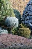 Trädgårdgränser med barrträd och räkningsväxter Fotografering för Bildbyråer