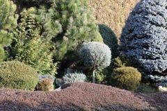 Trädgårdgränser med barrträd och räkningsväxter Arkivbild