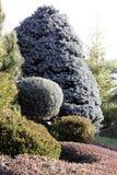Trädgårdgränser med barrträd och räkningsväxter Royaltyfria Foton