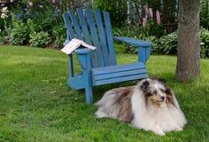trädgårdhund royaltyfri foto