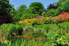 trädgårdparktatton Royaltyfri Fotografi