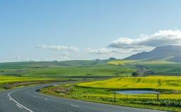 Trädgårdrutt i Sydafrika arkivfoto