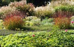 Trädgårdsängar med perenner och dekorativa gräs Royaltyfria Bilder