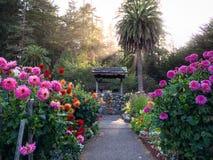 Trädgårds- önskande brunn Arkivbild