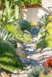 Trädgårds- agave för öken Arkivbilder