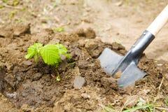 trädgårds- arbete Arkivfoto