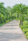 trädgårds- bana Royaltyfri Bild