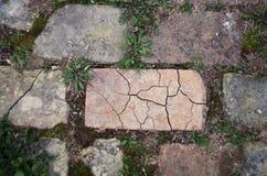 Trädgårds- bana av gyttjategelstenar, närbild Arkivbilder