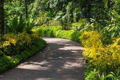 Trädgårds- bana med orkidér Royaltyfria Bilder