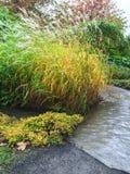 Trädgårds- bana och dekorativt gräs Royaltyfria Foton