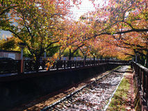 Trädgårds- bana på Japan Fotografering för Bildbyråer
