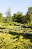 Trädgårds- barrträds- evergreen arkivfoto