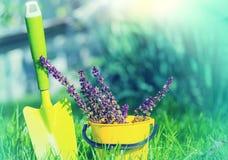 Trädgårds- bevattna för tool royaltyfri fotografi