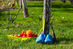 Trädgårds- bevattna för tool arkivfoton