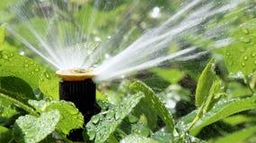 Trädgårds- bevattningsprejsystem som bevattnar blomsterrabatten Arkivfoton