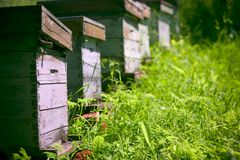 trädgårds- bikupar Royaltyfria Foton