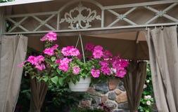 Trädgårds- blomkruka med karmosinröda blommor arkivfoto