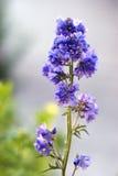 Trädgårds- blomma fotografering för bildbyråer