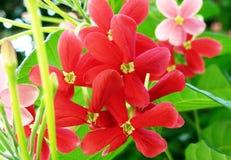 Trädgårds- blomma Arkivbilder