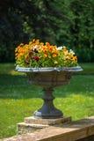 Trädgårds- blommavas Arkivfoto