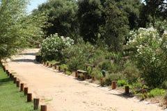 trädgårds- blomstra Royaltyfri Fotografi