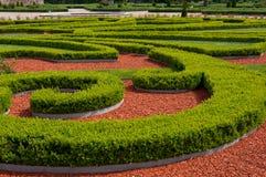 Trädgårds- buskar Arkivfoto