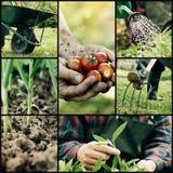 Trädgårds- collage royaltyfri bild