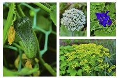 Trädgårds- collage arkivbild
