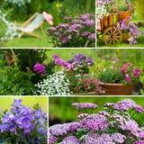 Trädgårds- collage för sommar royaltyfria bilder