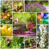 Trädgårds- collage för vår arkivfoto