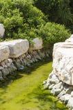 Trädgårds- damm Royaltyfri Bild
