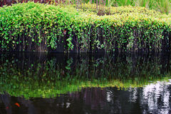 Trädgårds- damm Arkivbilder