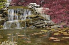 trädgårds- damm Royaltyfri Fotografi
