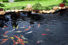 trädgårds- damm för fisk arkivfoton