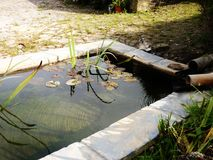 Trädgårds- damm med den naturliga liljan och vasser Royaltyfria Bilder