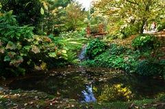 Trädgårds- damm och bro Royaltyfria Foton