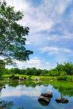 trädgårds- dammrock Arkivfoto