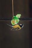 Trädgårds- fågel royaltyfri foto